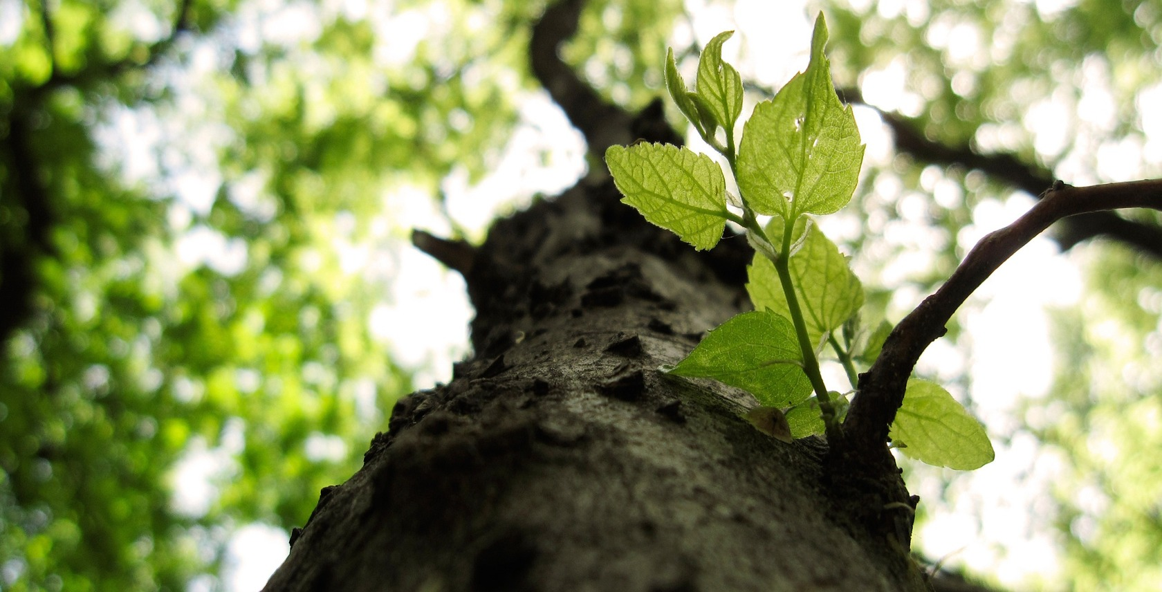 web design like planting a fresh tree